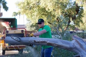 Top Leaf Tree Services - Chandler AZ Tree Removal, Tree Trimming, Palm Tree Removal Chandler Arizona